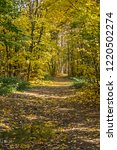 golden fall. norway maple  acer ... | Shutterstock . vector #1220502274