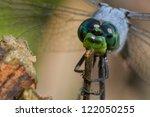 Male Eastern Pondhawk Dragonfl...