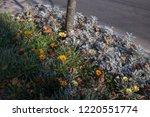 Dried Flower On The Roadside...