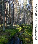mossy forest river stream view. ...   Shutterstock . vector #1220578237