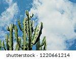 cereus cactus trunk against...   Shutterstock . vector #1220661214