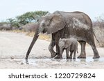 Mother And Baby Elephant In Th...