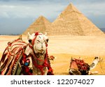 camel  in egypt | Shutterstock . vector #122074027