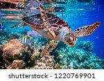 sea turtle swims under water on ... | Shutterstock . vector #1220769901