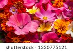 a composition from bright...   Shutterstock . vector #1220775121