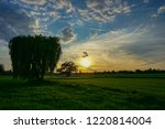weeping willow alone on the... | Shutterstock . vector #1220814004
