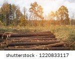 fighting beetle bark beetles ... | Shutterstock . vector #1220833117