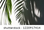 tropical palm leaves with... | Shutterstock . vector #1220917414
