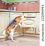 the dog in kitchen searches for ... | Shutterstock . vector #122094991