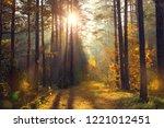 bright golden sunbeams in fall... | Shutterstock . vector #1221012451