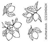 lemon tree vector illustration  ... | Shutterstock .eps vector #1221040624
