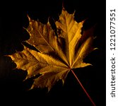 autumn yellow maple leaf on a... | Shutterstock . vector #1221077551
