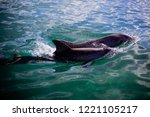 two playful dolphins swimming... | Shutterstock . vector #1221105217