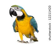 young blue and yellow macaw  ... | Shutterstock . vector #12211420