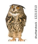 Stock photo eurasian eagle owl bubo bubo months in front of a white background 12211513