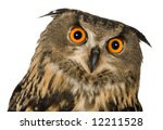 Stock photo eurasian eagle owl bubo bubo months in front of a white background 12211528