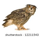 Stock photo eurasian eagle owl bubo bubo months in front of a white background 12211543