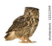 Stock photo eurasian eagle owl bubo bubo months in front of a white background 12211549