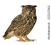 Stock photo eurasian eagle owl bubo bubo months in front of a white background 12211561
