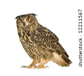 Stock photo eurasian eagle owl bubo bubo months in front of a white background 12211567