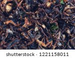 fried insect food | Shutterstock . vector #1221158011
