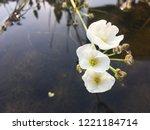 beautiful white flowers in...   Shutterstock . vector #1221184714
