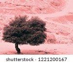 a solitary tree in the desert   Shutterstock . vector #1221200167