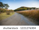 path between autumn reed fields  | Shutterstock . vector #1221276304
