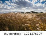 reed field and autumn sky... | Shutterstock . vector #1221276307