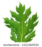 papaya leaf isolated on white... | Shutterstock . vector #1221365524