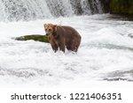grizzly bear in alaska katmai... | Shutterstock . vector #1221406351