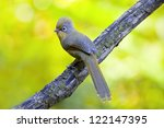 spectacled barwing  actinodura... | Shutterstock . vector #122147395