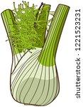 fennel  green  leaves | Shutterstock .eps vector #1221523231