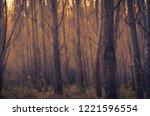 mist forest an autumn day.... | Shutterstock . vector #1221596554