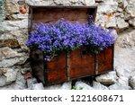 blue trailing lobelia sapphire... | Shutterstock . vector #1221608671