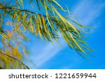 branches of weeping willow tree ...   Shutterstock . vector #1221659944