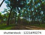 big pine at bor keaw pine park... | Shutterstock . vector #1221690274