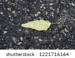 isolated leaf on gravel... | Shutterstock . vector #1221716164