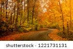 Sunlight Through Autumn Foliage ...