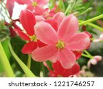 colorful flowers  beautiful... | Shutterstock . vector #1221746257