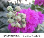 colorful flowers  beautiful... | Shutterstock . vector #1221746371