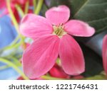 colorful flowers  beautiful... | Shutterstock . vector #1221746431