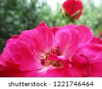 colorful flowers  beautiful... | Shutterstock . vector #1221746464