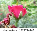 colorful flowers  beautiful... | Shutterstock . vector #1221746467