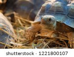 Stock photo african spurred tortoise turtles of nature photography in forests 1221800107