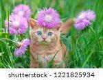Stock photo cute little kitten sitting in flowers on the grass 1221825934