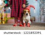 pet dog jack russell terrier... | Shutterstock . vector #1221852391