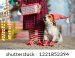 pet dog jack russell terrier... | Shutterstock . vector #1221852394