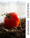 soil  tomato and sprout | Shutterstock . vector #1221911401