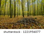the heap of sticks in forest in ... | Shutterstock . vector #1221956077